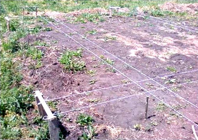 Разметка земельного участка  Правильный ленточный фундамент для дома razmetka uchastka